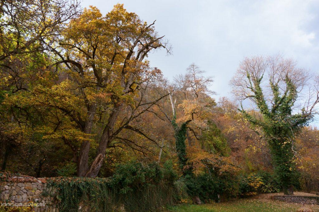 Красивите дървета в двора на Земенски манастир