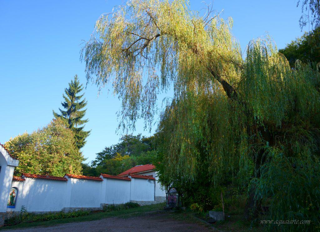 Площадчето пред манастира със старата чешма под върбата.