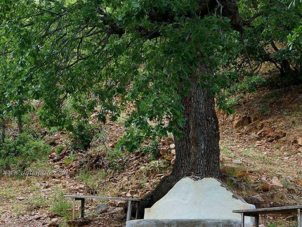 Стара чешма под дърво пред Чуриловския манастир и пейки за почивка